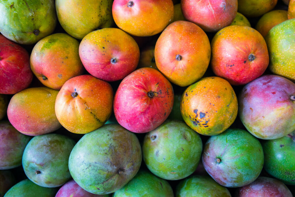 Close up view of ripe Florida mangoes
