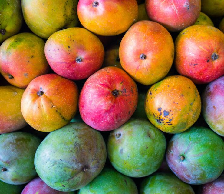Close up view of ripe Florida mangoes
