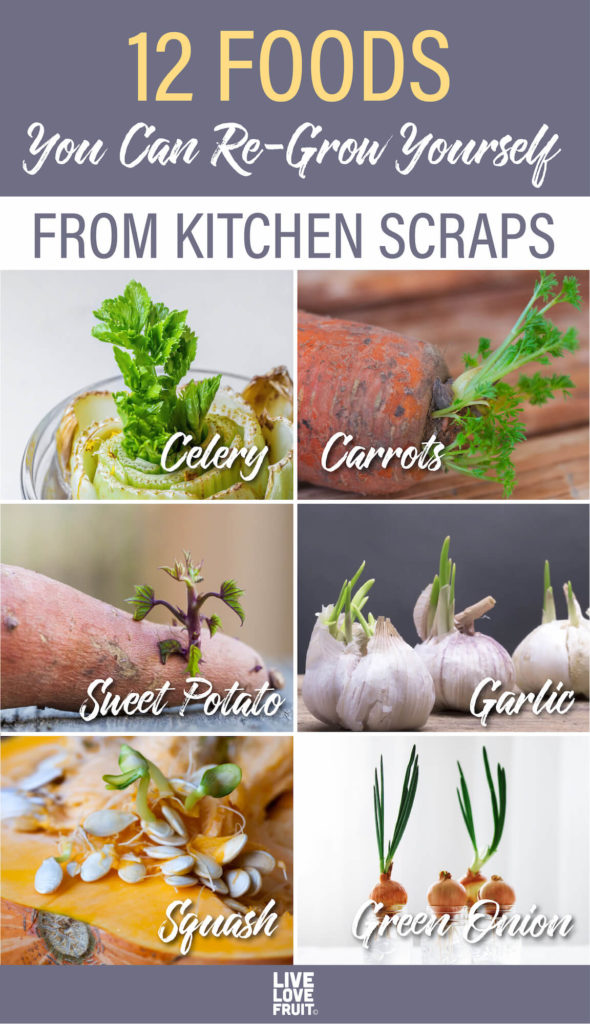 various plants sprouting from cuttings with text - 12 foods you can re-grow yourself from kitchen scraps