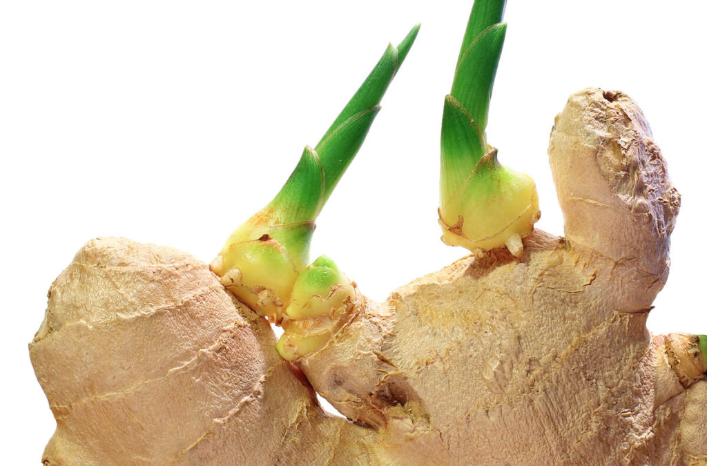 ginger sprout