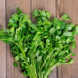 fresh cilantro on wood background