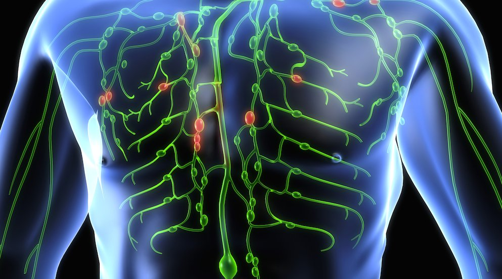3D representation of lymphatic system in the body