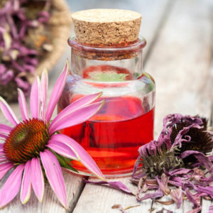 dried echinacea flowers on table next to little container of essential oil