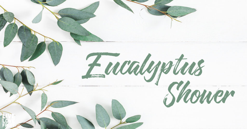 Eucalyptus leaves on white background.