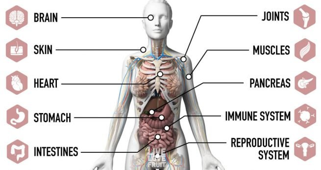 organs affected by stress