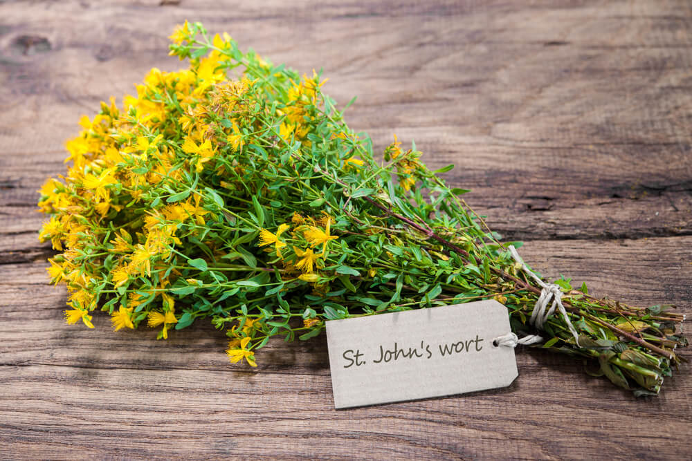 st. john's wort herb on wooden table