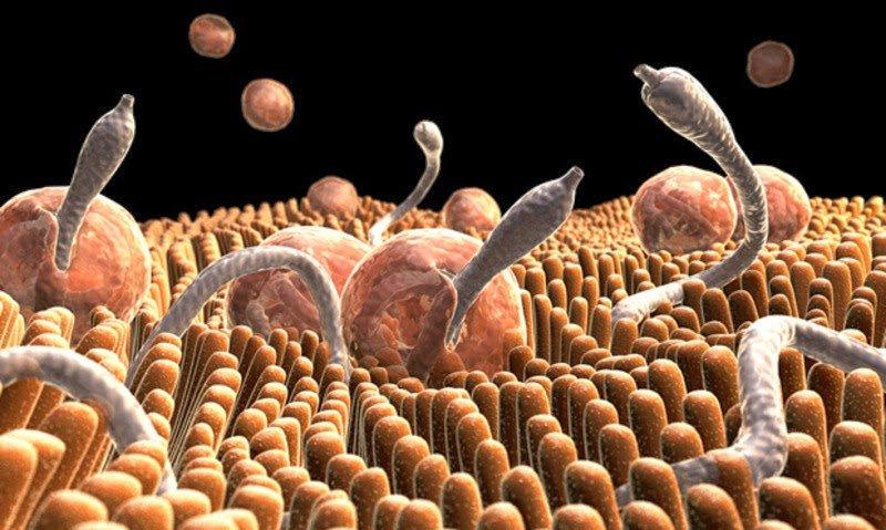 Eliminate Parasites