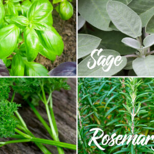 various anti-inflammatory herbs for pain relief like parsley, rosemary, basil and sage