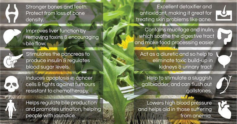 Dandelionbenefits