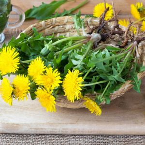 whole dandelion plant with flowers and roots on cutting board on a table