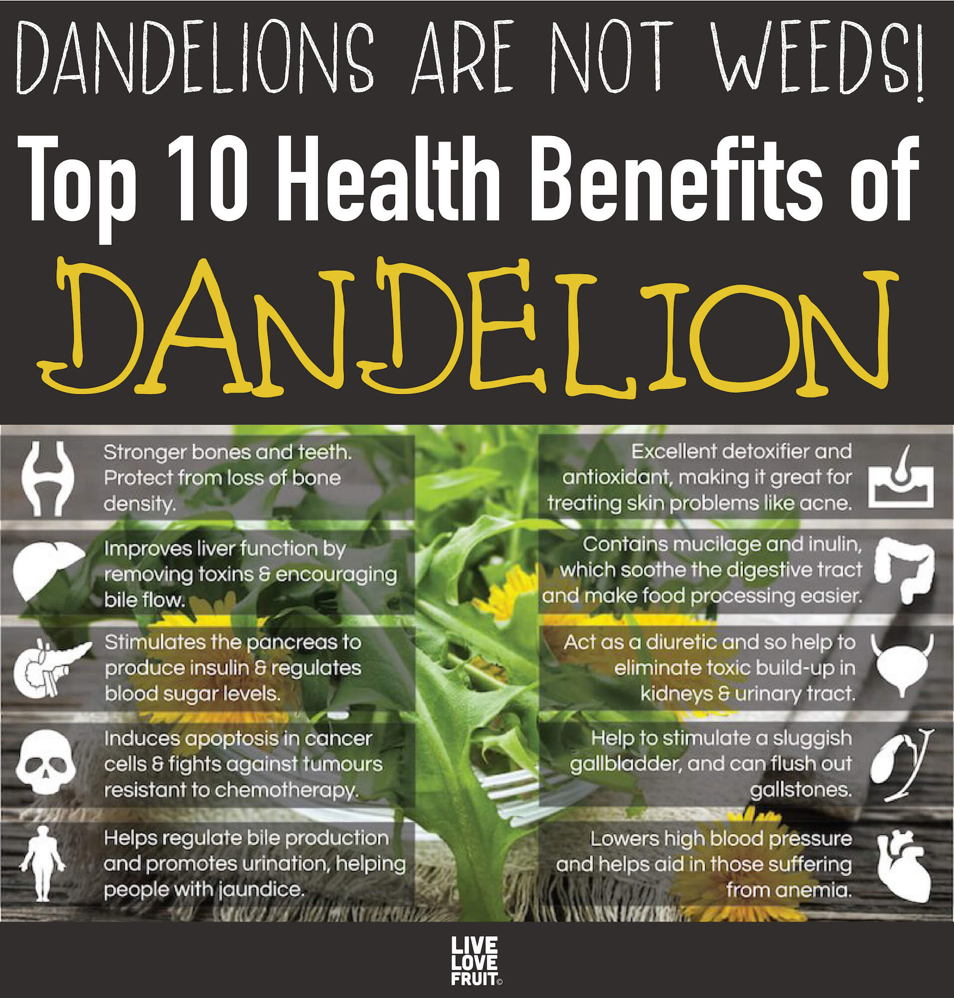 10 health benefits of dandelion laid out over background of cut dandelion with text - dandelions are not weeds! Top 10 health benefits of dandelion