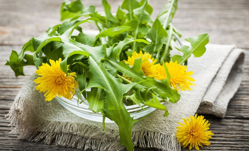 health-benefits-of-dandelion