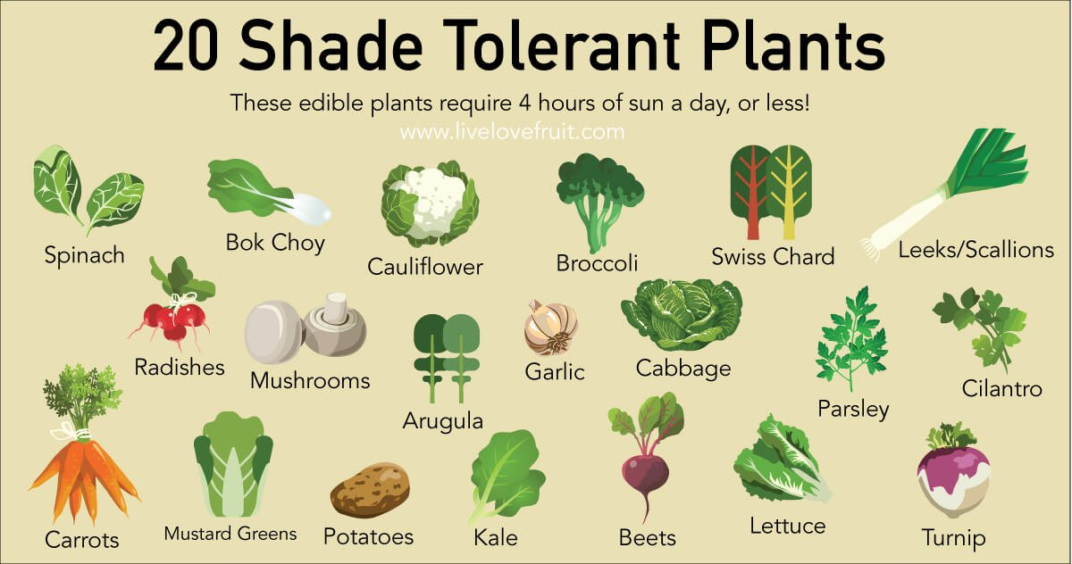 shade tolerant plants