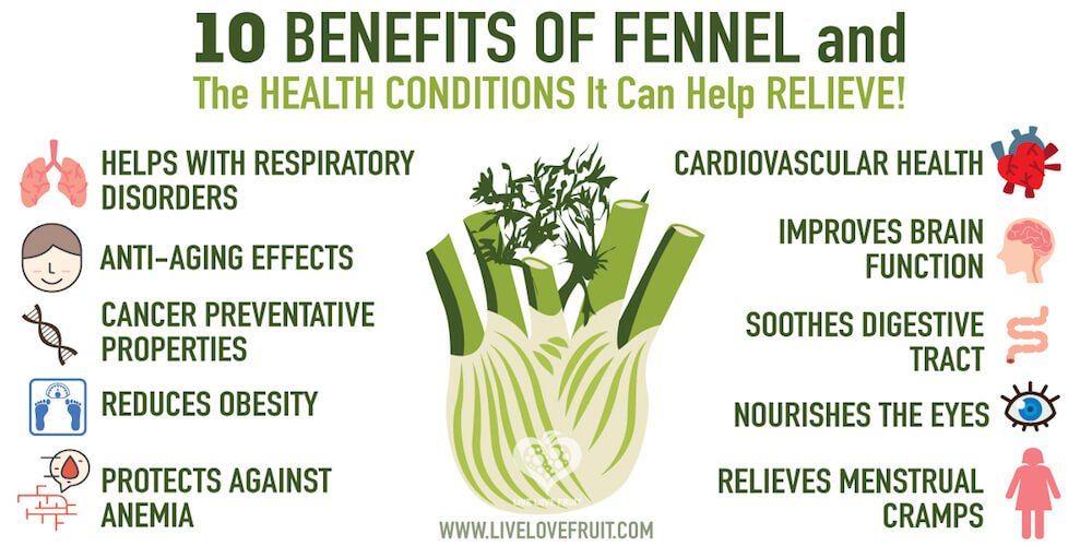 fennelbenefits