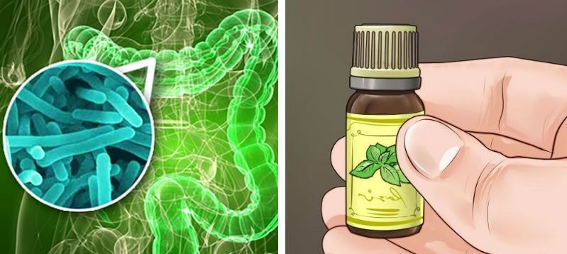 Essential Oils Instead of Antibiotics