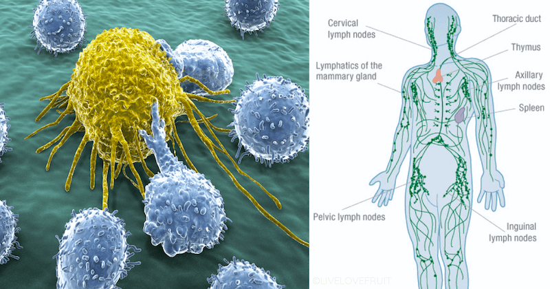 lymphatic system next to cancer