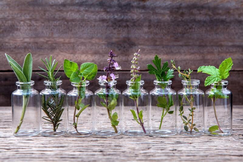 Herbs You Can Grow Indoors