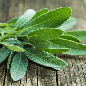 culinary sage on wooden table
