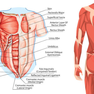 illustration of core muscles next to back muscles with pain symbol representing lower back pain