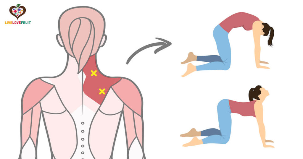 illustration of trigger points in shoulder next to cat and cow stretch