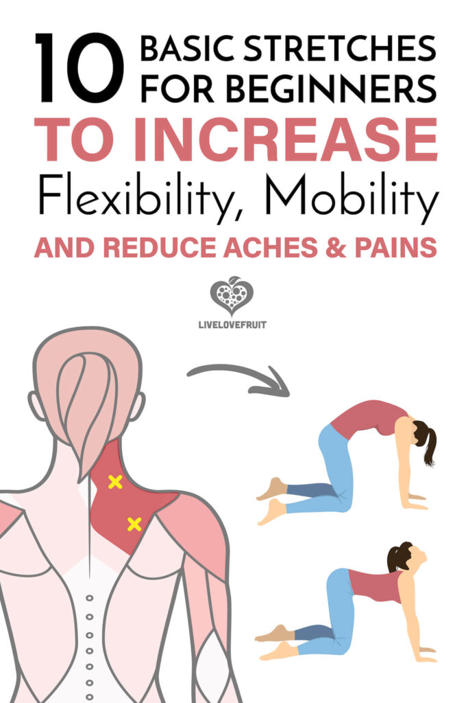 diagram of pain in shoulder and cat and cow exercise with text - 10 basic stretches for beginners to increase flexibility, mobility, and reduce aches and pains
