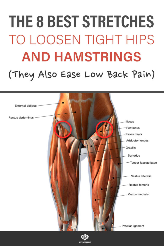3d rendering of Front Leg Muscles with text - the 8 best stretches to loosen tight hips and hamstrings (they also ease low back pain)