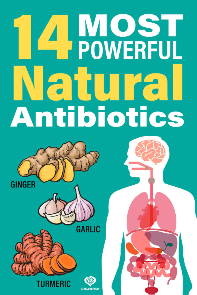 Illustration of body next to various herbs with text - 14 most powerful natural antibiotics