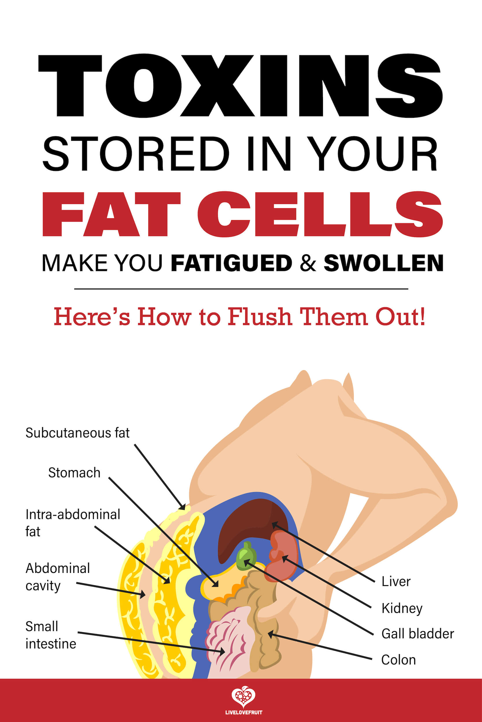 visual illustration of toxins stored in fat cells in body with text - toxins stored in your fat cells make you fatigued & swollen. Here's how to flush them out!