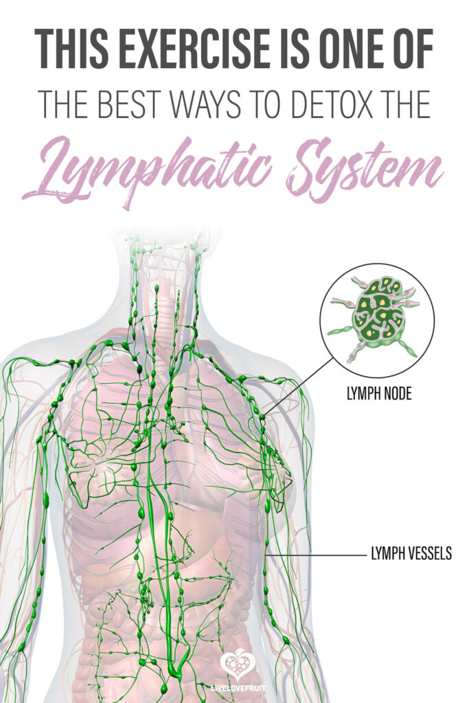 illustration of lymphatic system with text - this exercise is one of the best ways to detox the lymphatic system