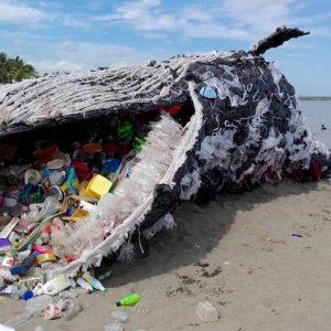 giant 'dead whale'