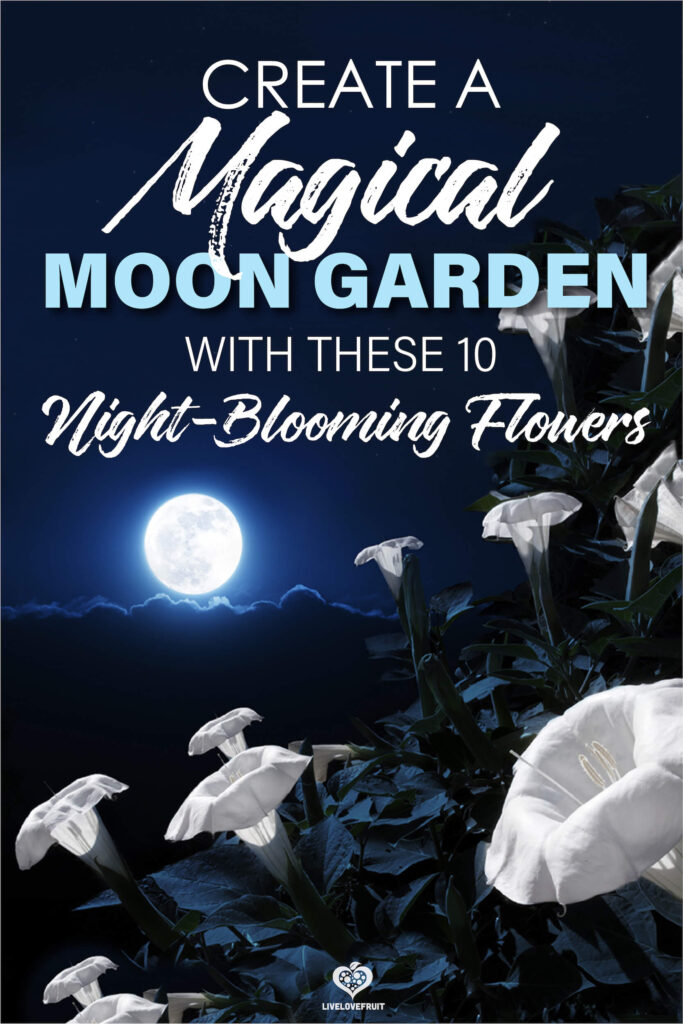moonflowers blooming in the moonlight with text - create a magical moon garden with these 10 night-blooming flowers