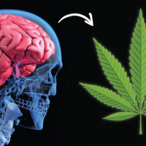 marijuana-for-alzheimers