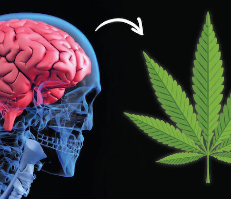 marijuana-for-alzheimers