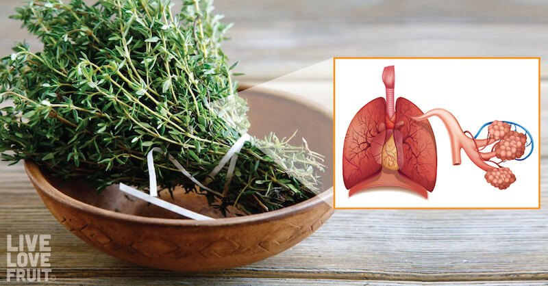 lung-cleansing herbs