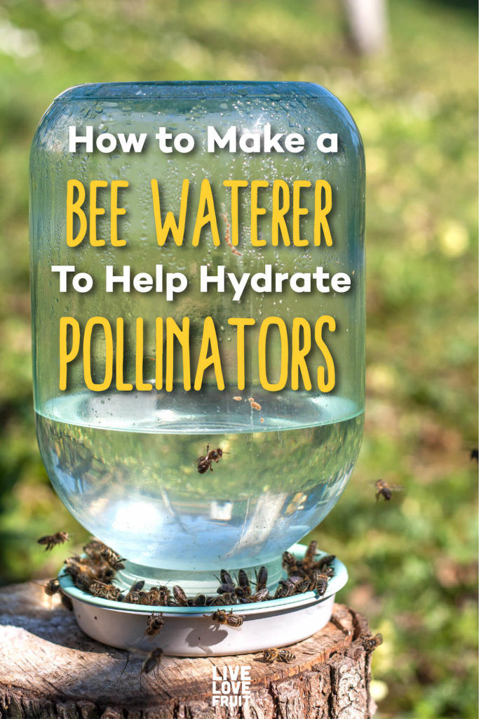 homemade bee waterer with bees along edge with text - how to make a bee waterer to help hydrate pollinators