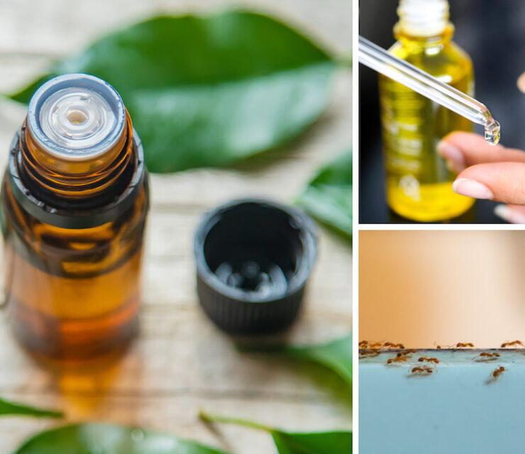 variety of uses of tea tree oil