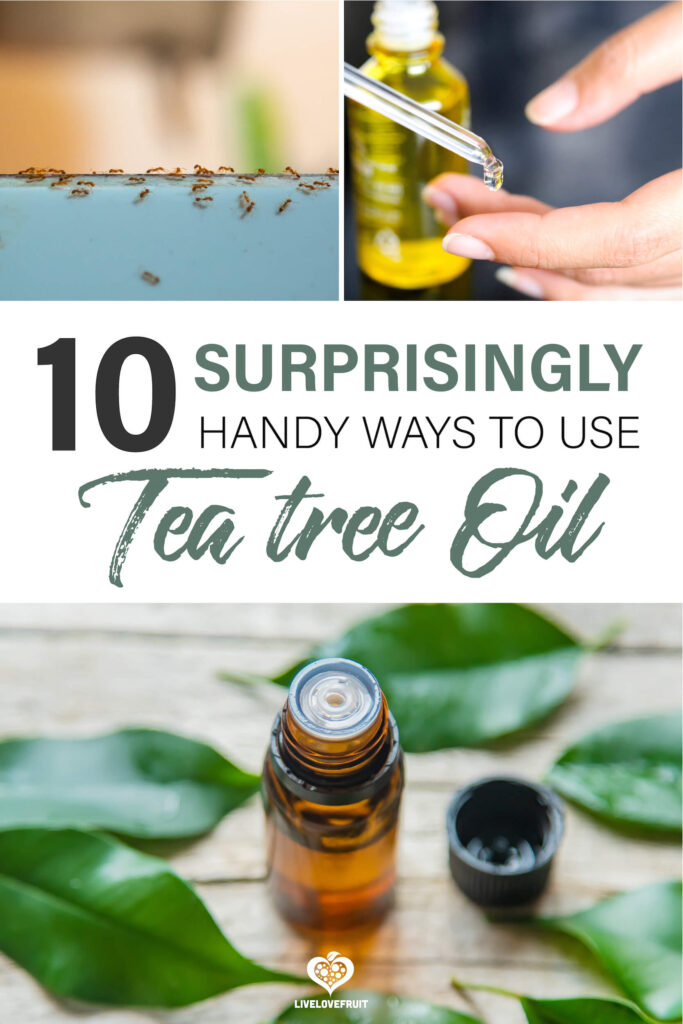 various uses of tea tree oil shown with text - 10 surprisingly handy ways to use tea tree oil