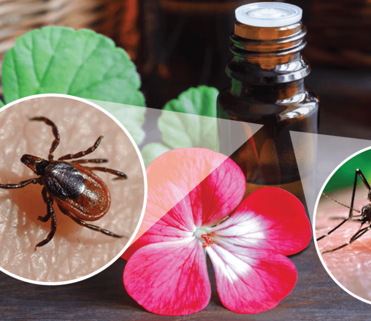 essential oil bug repellents