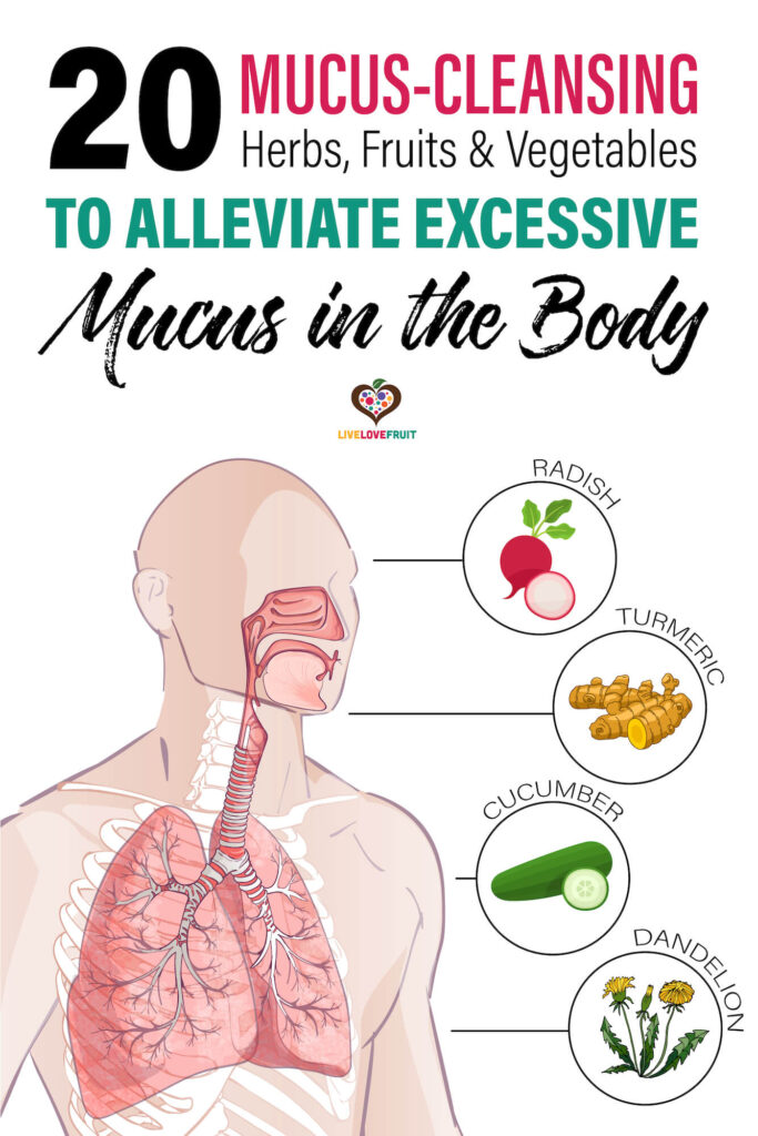 illustration of lungs next to lung-cleansing herbs, fruit and veggies with text - 20 mucus-cleansing herbs, fruits & vegetables to alleviate excessive mucus in the body