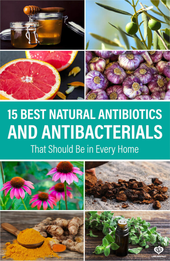 different natural antibacterials with text - 15 best natural antibiotics and antibacterials that should be in every home