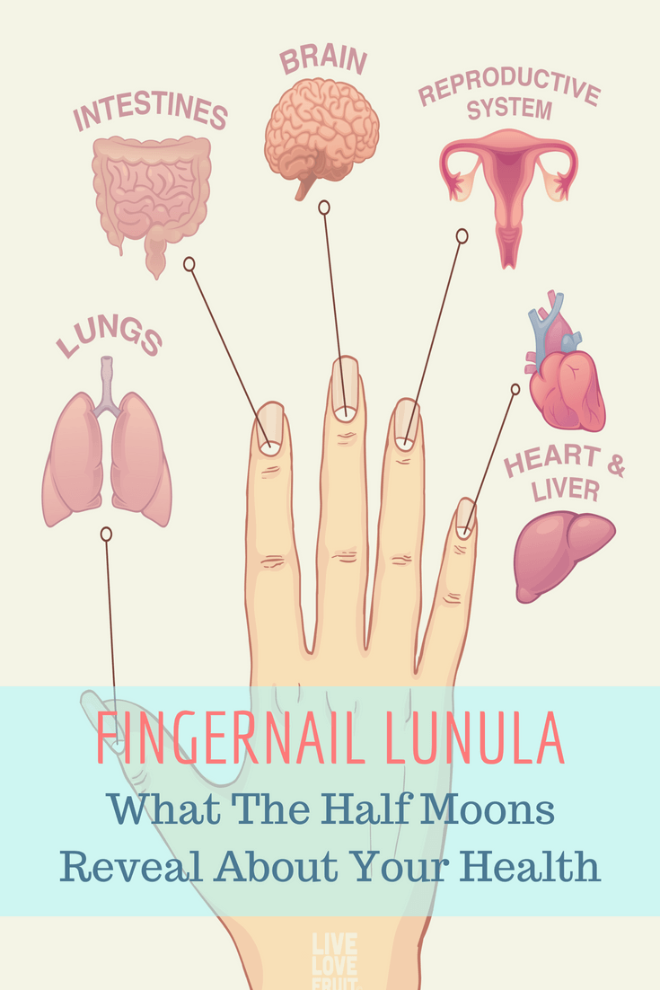 Your Fingernail Lunula Provide Valuable Information About Health An Absent Or Discolored May
