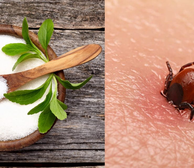 stevia kills lyme disease