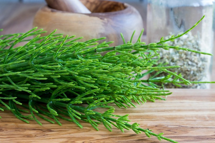 how to use horsetail herb