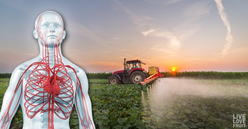 adjuvants in glyphosate-based herbicides