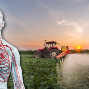 adjuvants in glyphosate-based herbicides