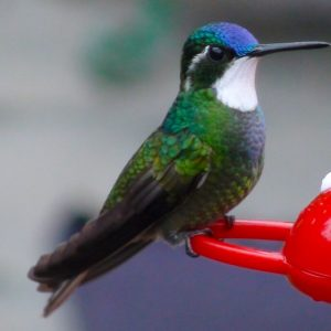 feeders killing hummingbirds