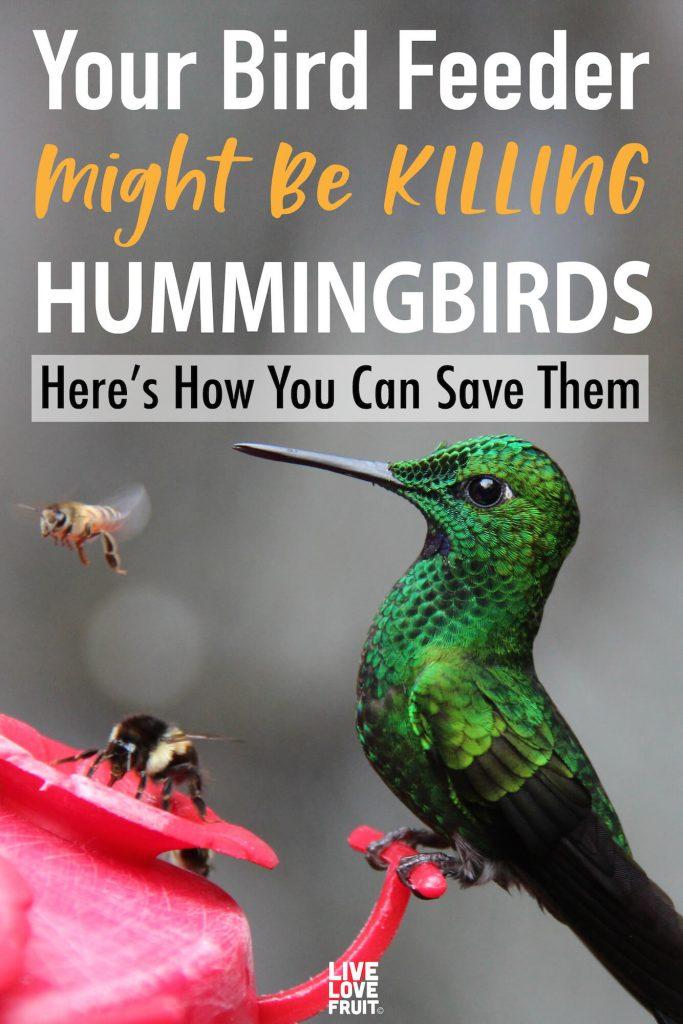 bird feeder killing hummingbirds