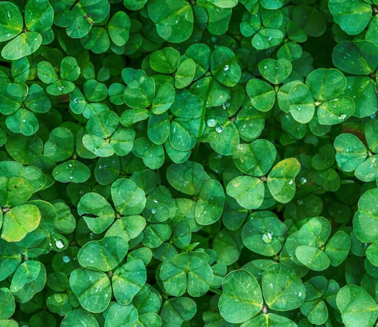 clover lawn pros and cons