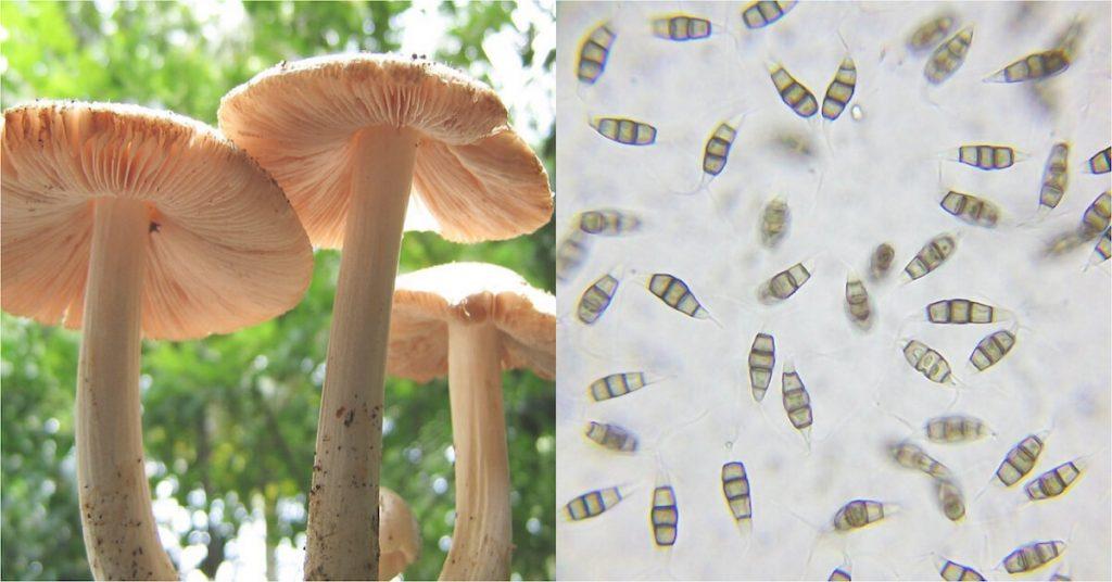 mushroom eats plastic