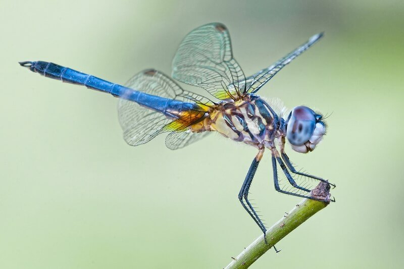 Up Close of Dragonfly Sitting on Stick